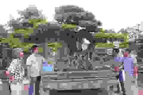 """Đã mắt với vườn sanh cổ triệu đô của """"đại gia nông dân"""" Hà Nội"""