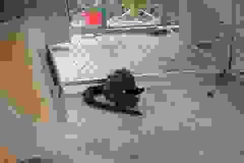 Tiếp nhận 68 cá thể động vật hoang dã để thả về tự nhiên