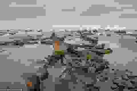 Cơn bão quét qua làm lộ khu rừng 4.500 năm tuổi bị chôn vùi dưới cát