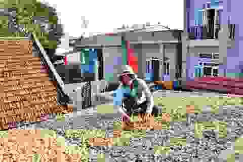 Quảng Ngãi: Dù giá tỏi xuống cực thấp, đảo Lý Sơn vẫn tồn trên 1.500 tấn