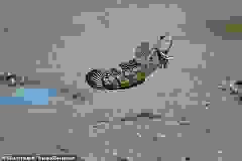 Nghiên cứu phát hiện một số loài cá có thể đi bộ trên mặt đất