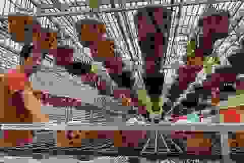 Vườn trồng toàn lan đột biến trị giá hơn 60 tỷ đồng ở Cần Thơ