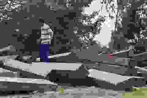 Thêm thủ đoạn phá rừng tại Phú Yên: Dùng cả đàn trâu kéo gỗ đi tiêu thụ!