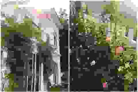 Biệt thự nhà vườn ngập tràn các loại hoa của gia đình ở Bình Dương