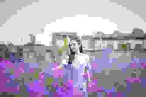"""Hà Nội: Rủ nhau """"check-in"""" với cánh đồng oải hương thảo đẹp như trời Tây"""