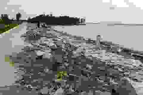 Lãng phí hàng chục tỷ đồng trong dự án đê biển, Cà Mau phải giải trình khẩn