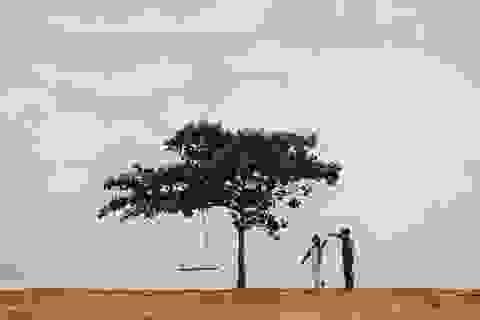 """Đẹp ngỡ ngàng cây bàng """"cô đơn"""" ở Bình Thuận"""