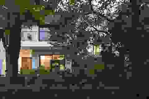Gia đình Hà Nội làm biệt thự xanh, vào nhà mát rượi không cần điều hòa