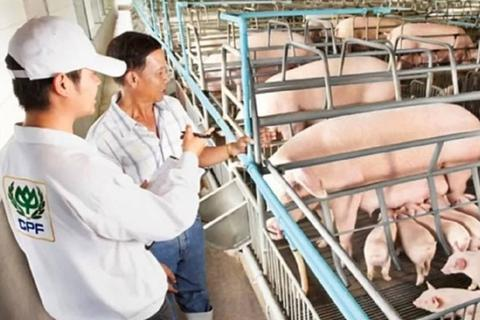 CP Group đầu tư hơn 4 tỷ USD vào ngành chăn nuôi lợn tại Trung Quốc