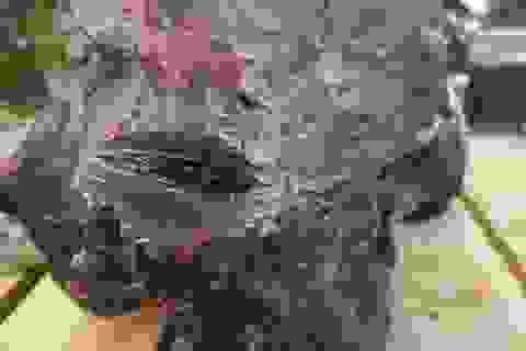 """Tìm được 2 khối đá nghi là """"báu vật"""" long diên hương trên biển Quảng Ngãi"""