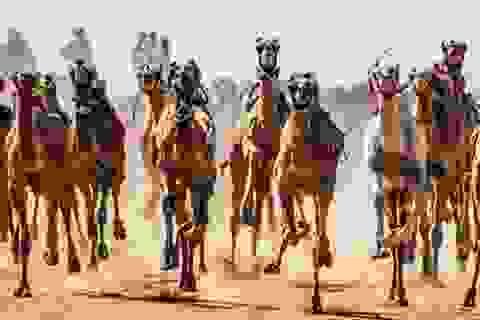 """Đường đua các """"chiến binh lưng gù"""" tại Sinai sôi động trở lại"""