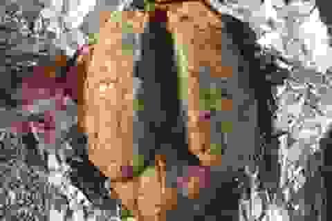 """Vật thể kỳ lạ như """"bộ não"""" bí ẩn dạt vào bờ biển"""