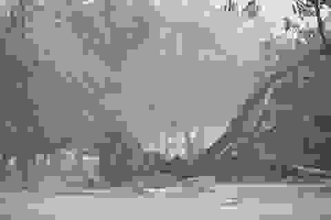 Bão số 5 đã vào đất liền các tỉnh Quảng Trị - Thừa Thiên Huế