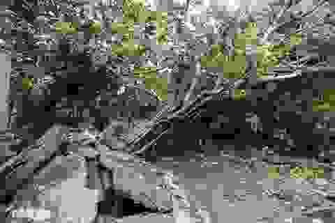 1 người chết, 31 người bị thương do bão số 5