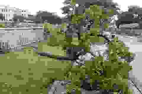 Đà Nẵng: Nhiều cây xanh bật gốc, người dân ra cửa biển bắt cá sau bão