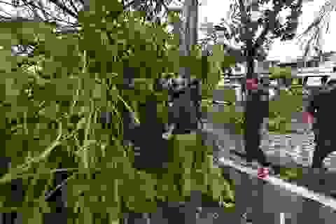 Toàn tỉnh Thừa Thiên Huế đang bị cúp điện