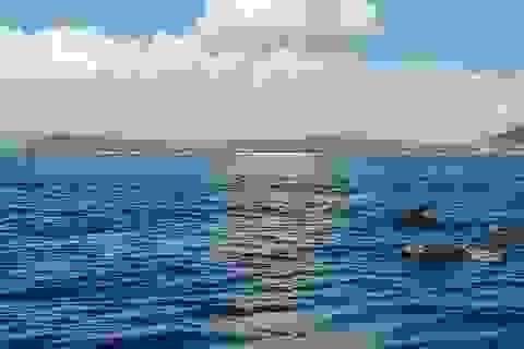 Đàn cá heo hàng trăm con bơi tung tăng trên vùng biển Phú Yên