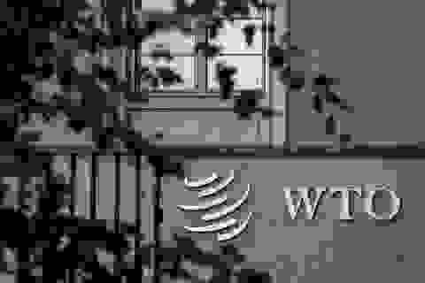"""""""Chiến thắng hiếm hoi"""" của Trung Quốc sau phán quyết của WTO"""