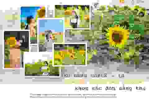 Ngắm cánh đồng hoa hướng dương rực rỡ, trải thảm vàng trong KĐT Ecopark