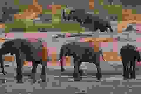 Lo hệ lụy môi trường, Zimbabwe rút giấy phép khai mỏ của công ty Trung Quốc