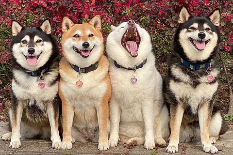 """Bật cười với bộ ảnh về chú chó """"phá đám đỉnh cao"""""""