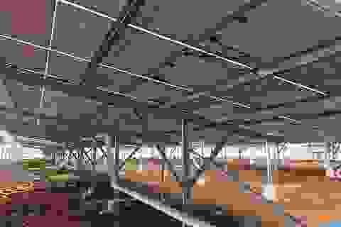 Điện mặt trời trang trại không được hưởng giá cao