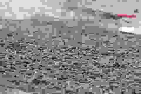 Dân đổ xô ra biển nhặt ốc xoăn dạt vào bờ sau bão