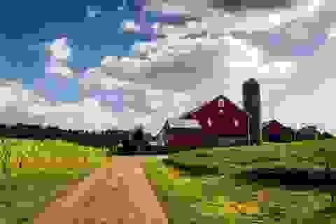 """Đất nông nghiệp Mỹ tăng kỷ lục, trở thành kênh đầu """"vàng"""" trong đại dịch"""
