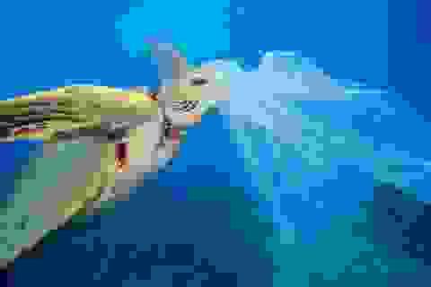Tại sao cá thường nhầm rác thải nhựa là thức ăn?