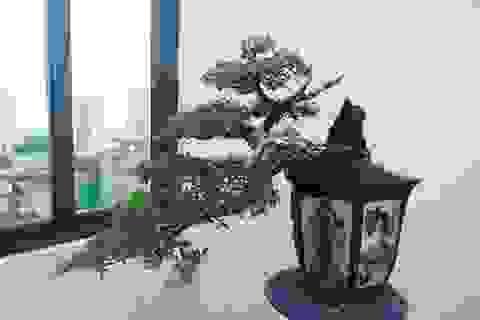 """Nghệ nhân Hà Nội bật mí về bonsai kích thước nhỏ nhưng giá """"khủng"""""""