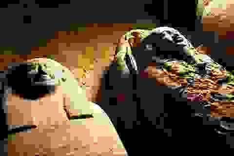 Phát hiện số xác ướp Ai Cập nhiều chưa từng có trong lịch sử ở giếng cổ 2.500 năm