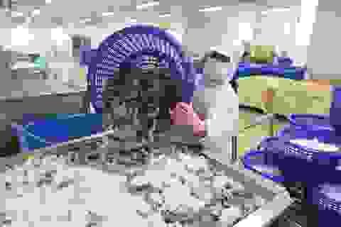 """Xuất khẩu tôm """"hốt bạc"""" ở thị trường Mỹ và châu Âu"""