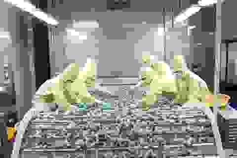 """Người Anh thích ăn tôm Việt, doanh nghiệp """"bỏ túi"""" hơn 3.700 tỷ đồng"""