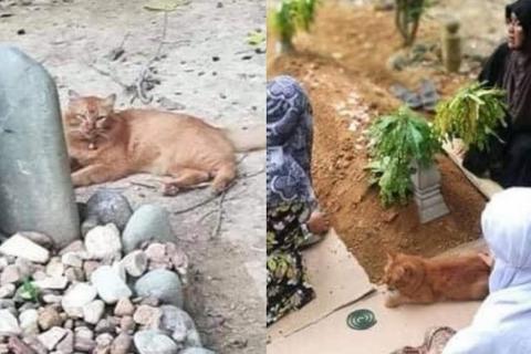 Cảm động chú mèo suốt hai năm, ngày nào cũng đến thăm mộ chủ