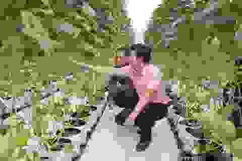 Bỏ nghề báo, chàng trai Hà Nội về quê trồng dưa lưới, mỗi năm thu hơn 2,1 tỷ đồng
