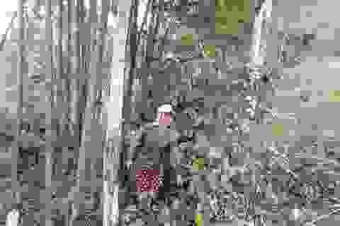 Hỗ trợ bà con dân tộc thiểu số chăm sóc bảo vệ rừng hơn 850 tấn gạo