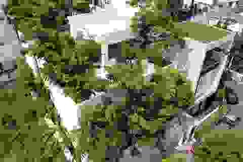 Độc đáo nhà trồng hơn 100 loại cây xanh, vào bên trong như rừng nhiệt đới