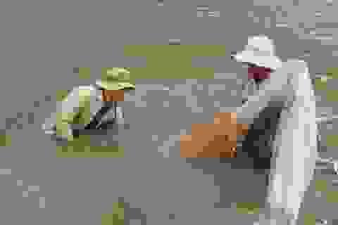 Hơn 30.700 lao động được đào tạo nghề phi nông nghiệp giai đoạn 2012-2020