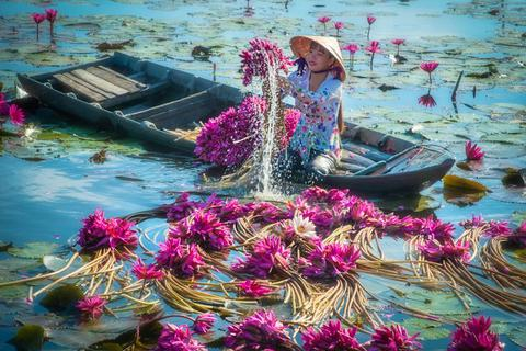 """Bộ ảnh """"Thu hoạch hoa súng"""" đậm chất thơ của nhiếp ảnh gia Việt Nam"""