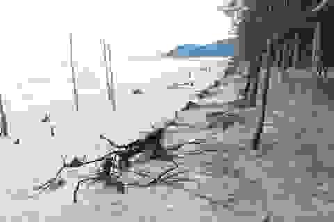 Bờ biển sạt lở nặng sau cơn bão số 5