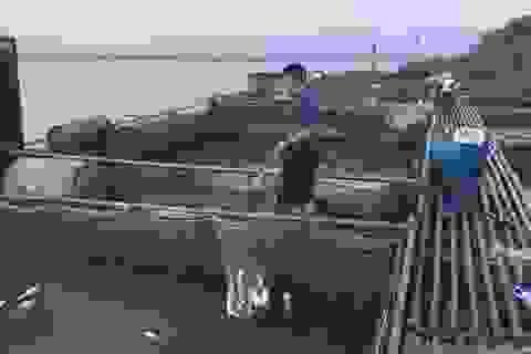 Kiến nghị thủy điện Hòa Bình hỗ trợ các hộ dân bị chết cá do xả lũ