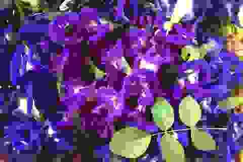 Hoa dại trước hiên nhà, sấy khô bán giá gần 1 triệu đồng/kg