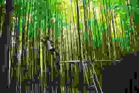 """Dân phượt """"phát sốt"""", săn tìm rừng trúc đẹp như phim cổ trang ở Yên Bái"""