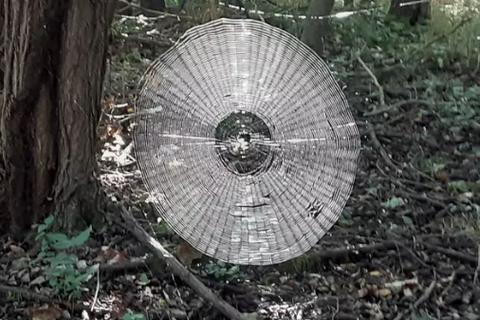 Choáng với mạng nhện khổng lồ đủ giăng bắt người trong khu rừng Mỹ