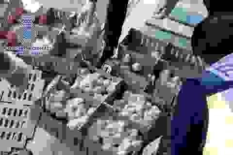 Phát hiện 23.000 gà con chết trong hộp giấy tại sân bay Tây Ban Nha