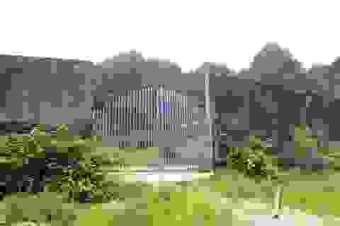 Sân vận động tiền tỷ trở thành nơi chăn thả gia súc tại huyện nghèo xứ Nghệ