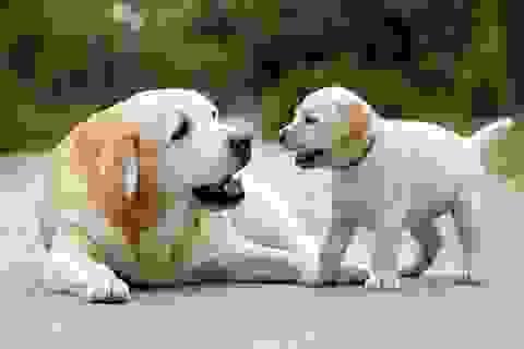 Những sự thật thú vị về loài chó mà có thể bạn chưa biết