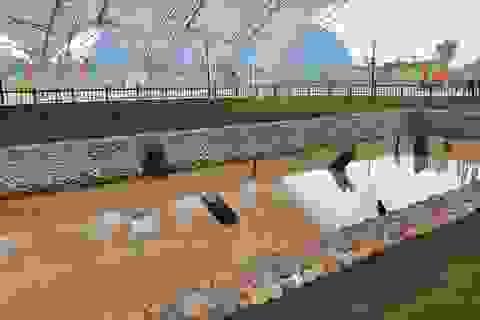 Thủ tướng dự lễ khánh thành Khu bảo tồn bãi cọc Cao Quỳ