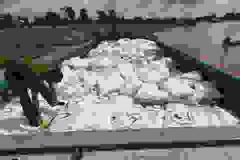 Bắt quả tang 2 vợ chồng vận chuyển 100 tấn đường cát nhập lậu