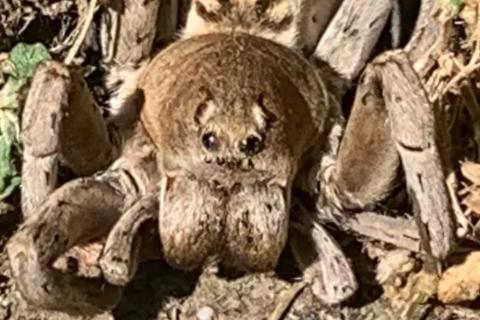"""Giật mình bức ảnh chụp nhện """"quái vật"""" ở sân sau nhà"""